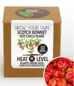 Scot Bonnet chili